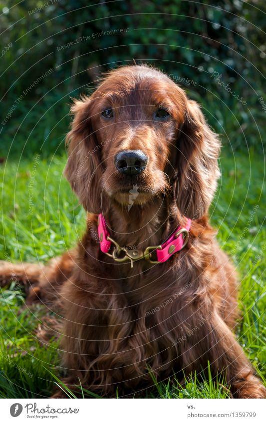 sunset Animal Pet Dog 1 Lie Healthy Happy Positive Contentment Joie de vivre (Vitality) Trust Loyal Love of animals Responsibility Attentive Watchfulness Calm