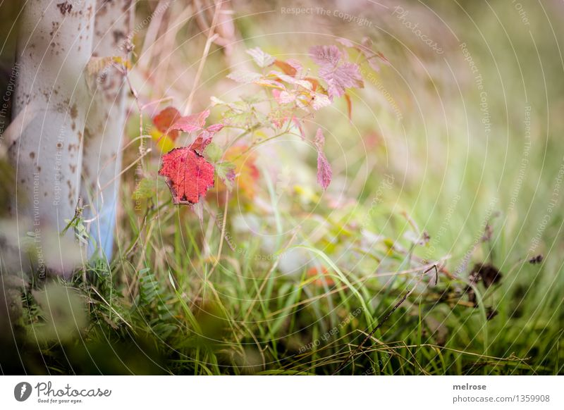 autumn swab Elegant Style Nature Landscape Autumn Beautiful weather Plant Tree Foliage plant Leaf Part of the plant Grass blossom Fern Meadow Forest