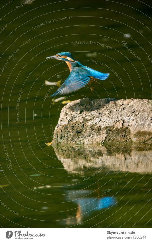 Nature Plant Blue Green Landscape Animal Environment Flying Lake Brown Bird Orange Weather Wild animal Wing Climate
