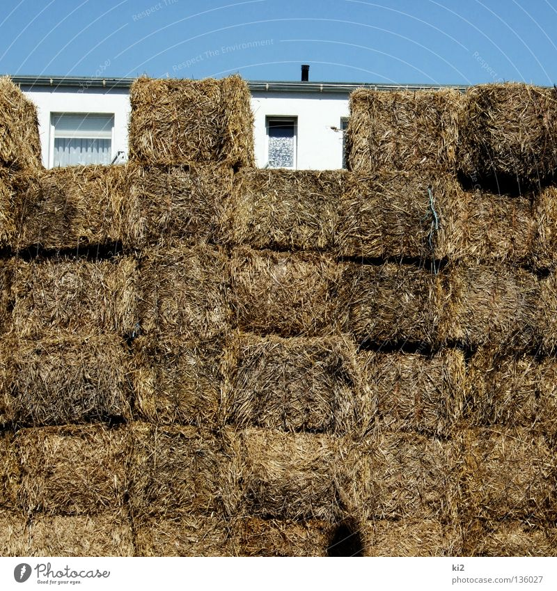 straw hut Straw House (Residential Structure) Blade of grass Safety (feeling of) Barricade Window Empty Summer Hide Gap