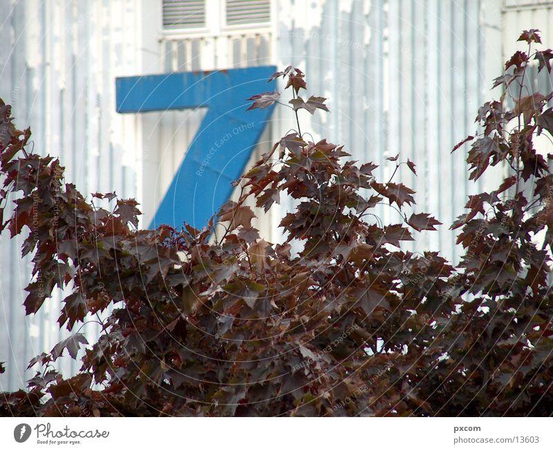 Blue Leaf Autumn Leipzig Autumn leaves 7 Exhibition hall