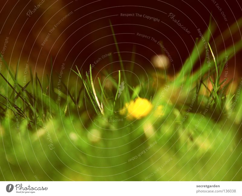 Nature Summer Flower Far-off places Relaxation Dark Nutrition Playing Freedom Blossom Grass Spring Park Bright Leisure and hobbies