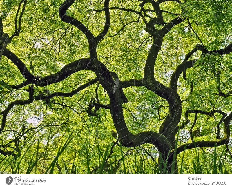 Tree Green Plant Leaf Black Forest Grass Spring Gray Park Brown Small Growth Asia Fantastic Blossoming