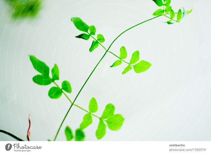 poisonous green Plant Tendril Green Twig Leaf Leaf green Copy Space Tilt Growth Garden Park Balcony Stalk