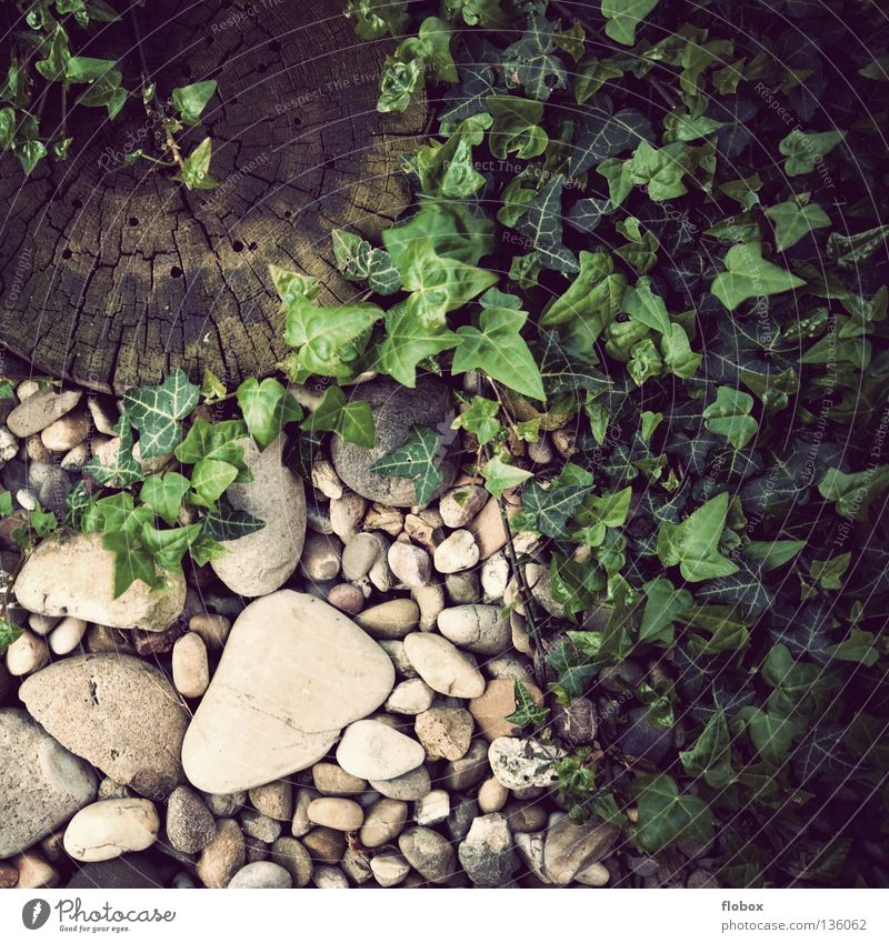 Nature Old Green Plant Wood Garden Stone Park Dangerous Floor covering Round Retro Idyll Ecological Gravel Biology