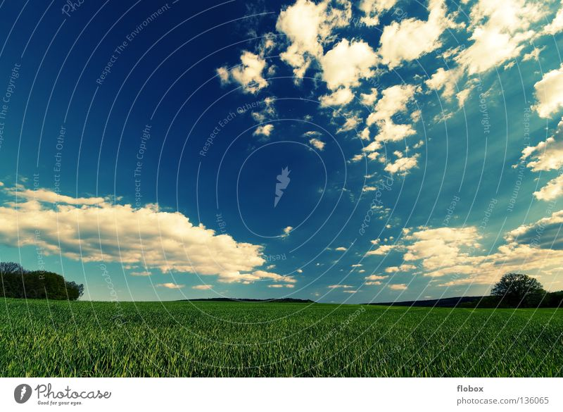 Nature White Green Summer Far-off places Landscape Field Beautiful weather Agriculture Picturesque Sky blue Clouds in the sky Wisp of cloud