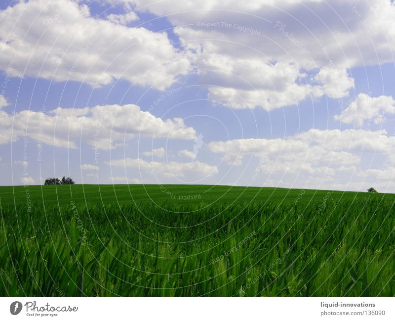 Freedom II Field Grass Barley Tree Green Physics Spring Force Fresh Juicy Clouds Horizon Summer Sky Warmth Nature Blue