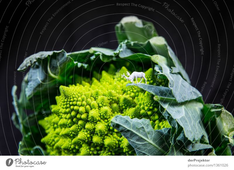 Deer gnawing at the leaf of a Romanesco Environment Nature Landscape Beautiful weather Plant Agricultural crop Wild animal Bravery Self-confident Cool (slang)
