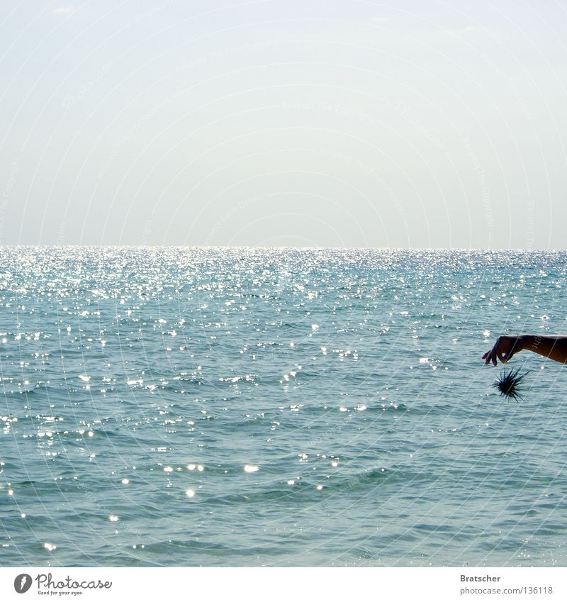 Ocean Animal Horizon Fear Dangerous Threat Point Cuba Panic Thorny Thorn Boast Test of courage Sea urchin