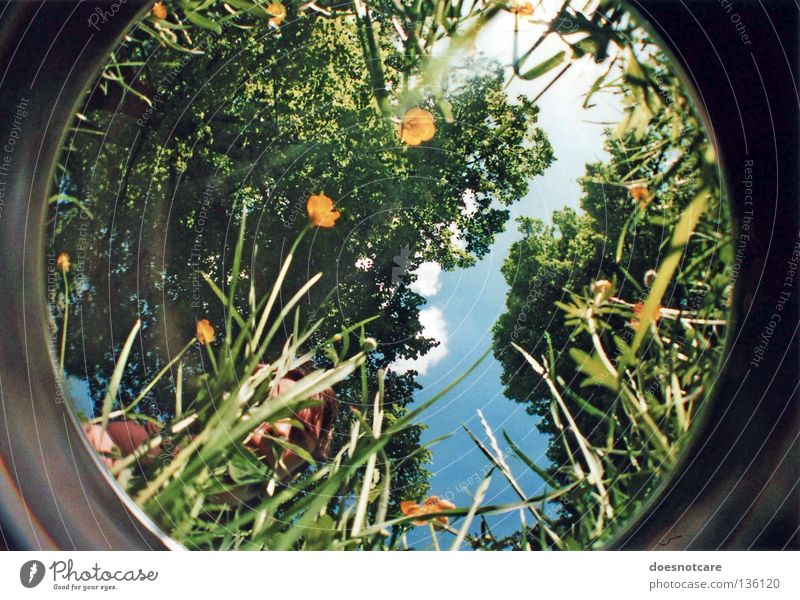 on what it means to grow. Summer Human being Man Adults Environment Nature Plant Sky Tree Flower Growth Green Maturing time Lomography Fisheye Hiding place Hide