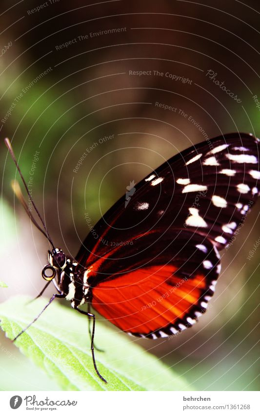 Stand still! Nature Plant Animal Spring Summer Beautiful weather Tree Leaf Garden Park Meadow Wild animal Butterfly Animal face Wing 1 Observe Relaxation Flying