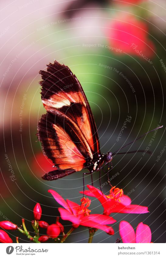 gaudy Nature Plant Animal Summer Beautiful weather Flower Leaf Blossom Garden Park Meadow Wild animal Butterfly Animal face Wing 1 Observe Blossoming Fragrance