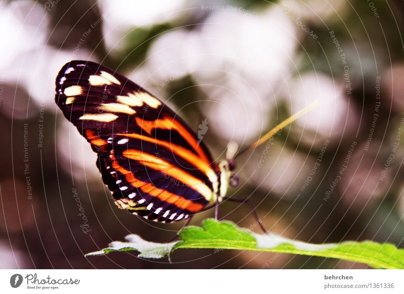 zebra Nature Plant Animal Spring Summer Tree Leaf Garden Park Meadow Wild animal Butterfly Wing 1 Observe Relaxation Flying To feed Sit Exceptional Elegant