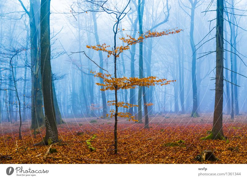 Fantasy forest with fog and orange leaves Spring Autumn Fog Tree Leaf Forest Dream Blue Surrealism Orange magic fantasy Enchanted forest Enchanted wood Mystic