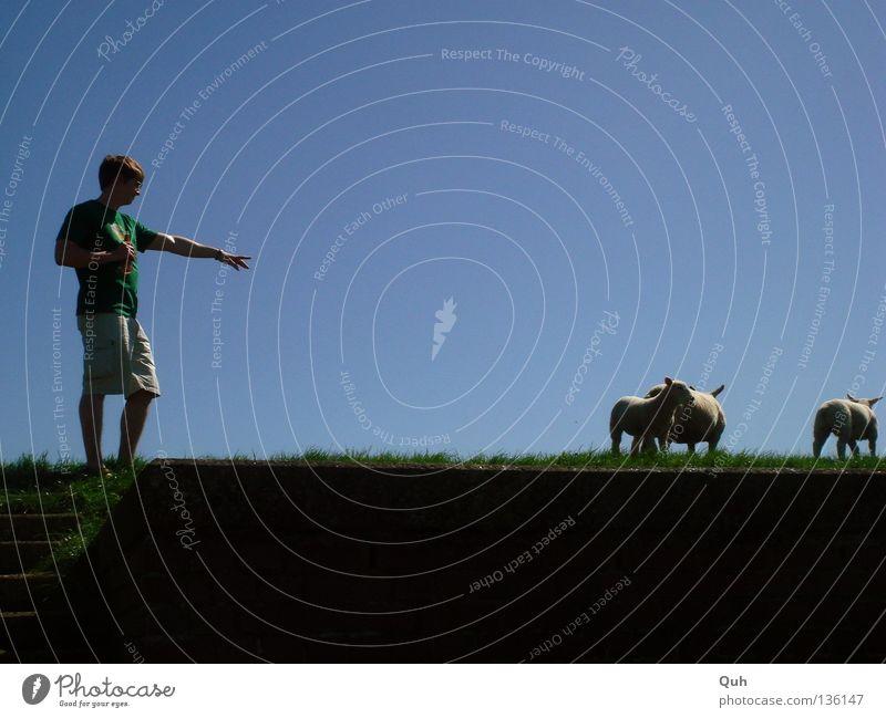 Human being Sky Man Blue Green Animal Meadow Grass Coast Arm Fingers Lawn River Hill Sheep Mammal