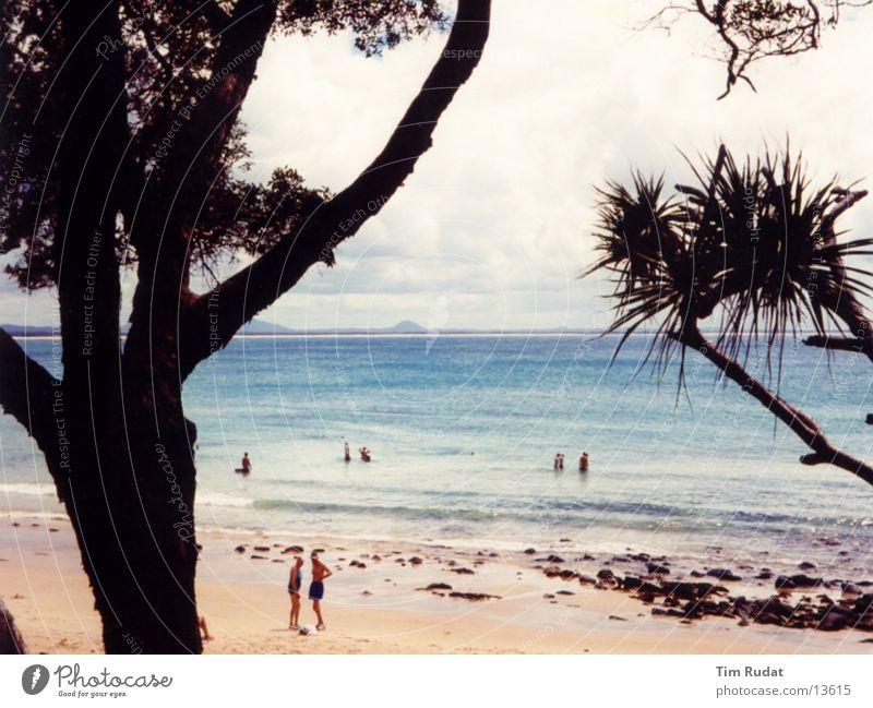 Australian Coast 2 Tree Beach Sand Human being
