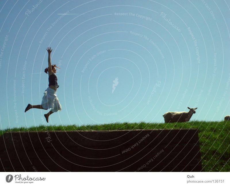 Girls jump differently ... Woman Sheep Dike Grass Hill Meadow Jump Hop Summer Animal Human being Lawn Pasture Lamb Arm Traffic infrastructure Blue Sky Funny Joy
