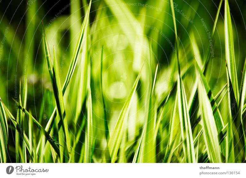 White Green Sun Summer Meadow Grass Spring Lawn Point Close-up Blade of grass Cut Mow the lawn