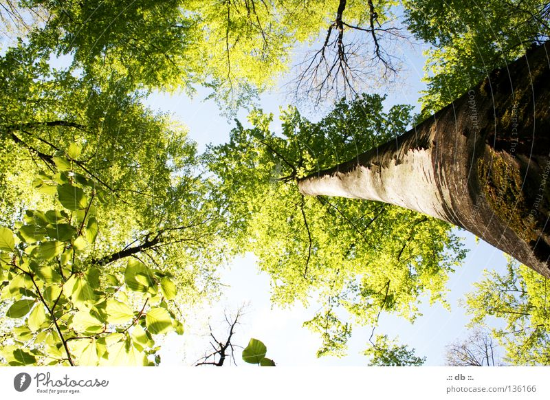 Sky Nature Green Tree Leaf Forest Spring Growth Branch Tree trunk Treetop Tree bark Twigs and branches Leaf canopy