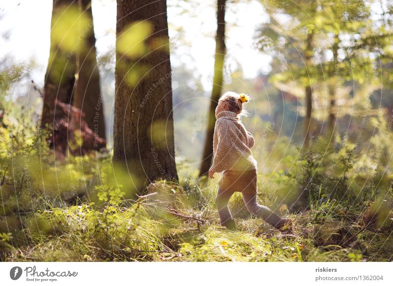 forest child Human being Feminine Child Girl Infancy 1 3 - 8 years Environment Autumn Beautiful weather Forest Discover Relaxation Illuminate Running Looking