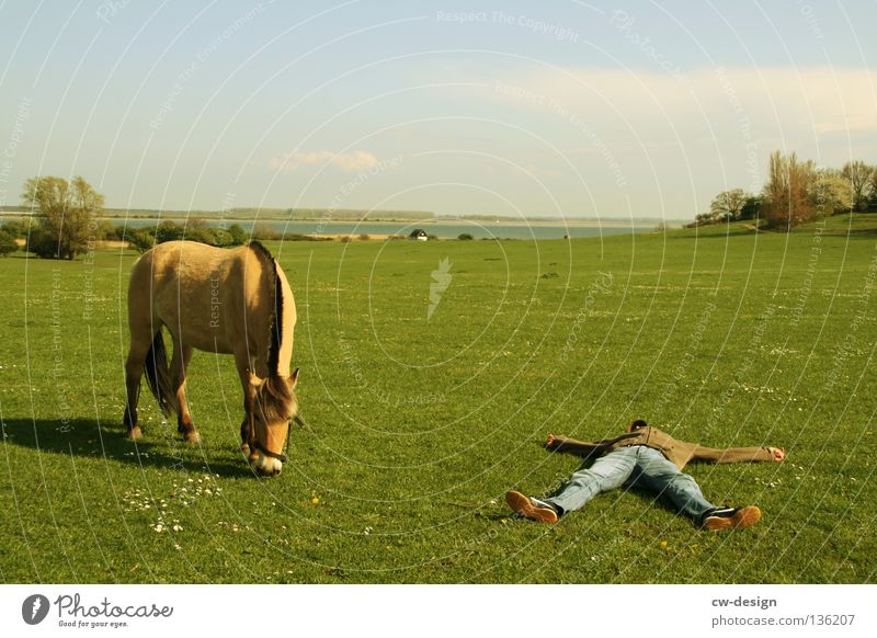 400th - chilling in suburban space Relaxation Dream Bedroom Horse Pasture Floor covering Chewing gum Pedestrian Timeless Stand Man Masculine Vacation & Travel