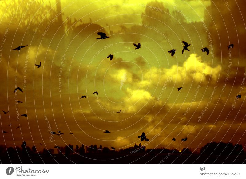 Sky Beautiful Landscape Black Exceptional Think Flying Bird Dream Future Transience Blaze Change Protection Infinity Mysterious