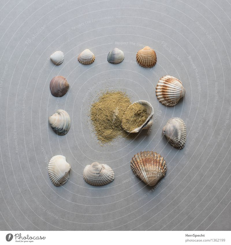 flotsam and jetsam Beach Souvenir Collection Collector's item Sand Esthetic Brown Gray Vacation mood Super Still Life knolling Classification Mussel