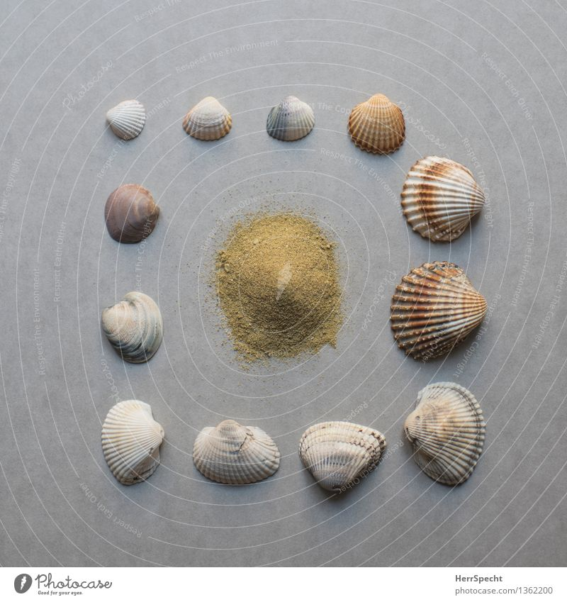 Beach kit Souvenir Collection Beautiful Natural Brown Gray Still Life Mussel shell Sand Sandy beach Vacation mood Colour photo Subdued colour Interior shot