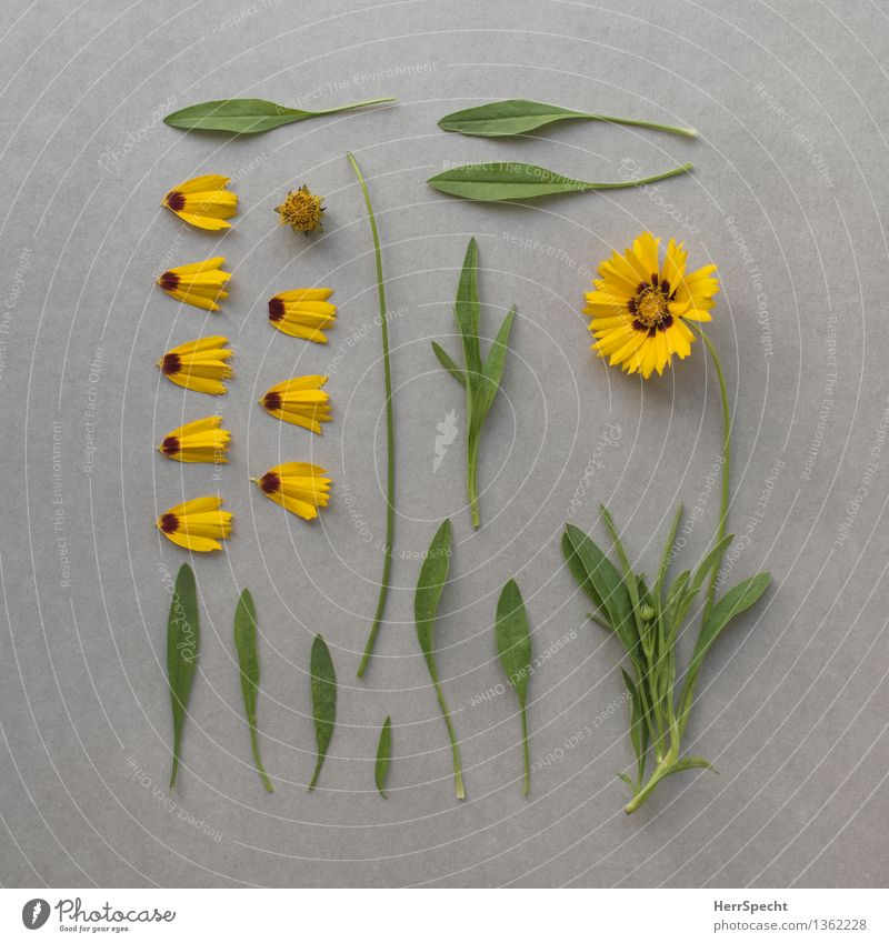 Flower incl. spare parts store Plant Leaf Blossom Collection Blossoming Lie Esthetic Broken Yellow Green Orderliness Nature Destruction Super Still Life Part