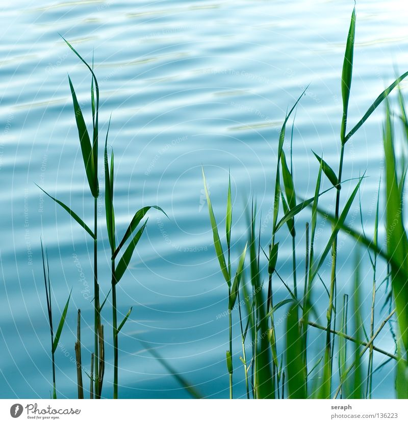 Reed Sky Nature Blue Water Green Plant Ocean Environment Meadow Grass Style Lake Air Dream Background picture Waves