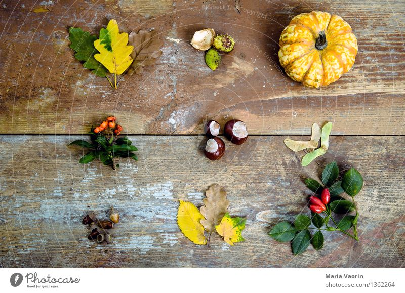 Autumn in detail Food Vegetable Nature Plant Bushes Leaf Foliage plant Wood Faded Environment Transience Change Autumn leaves Pumpkin Chestnut Rose hip Acorn
