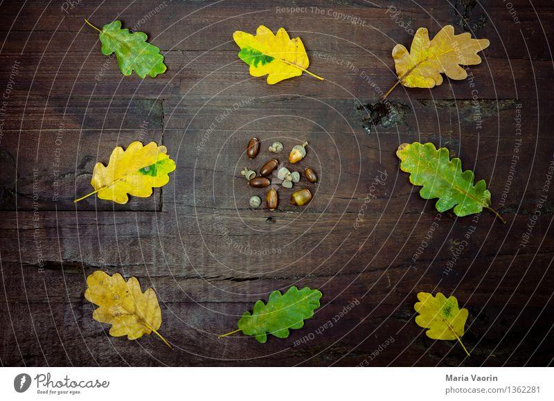 Leaves, foliage, foliage and acorns. Environment Nature Plant Tree Leaf Foliage plant Wood Yellow Green Oak leaf Acorn Arranged Wooden table Autumn