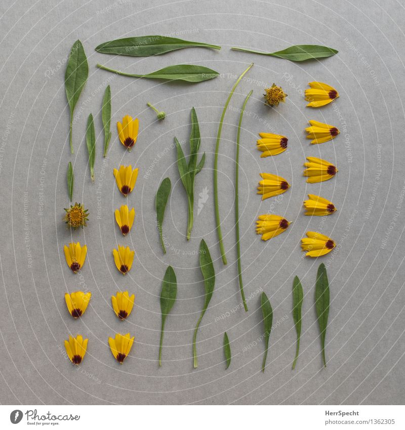 Flower kit Plant Leaf Blossom Esthetic Broken Funny Yellow Gray Green Super Still Life Part Classification knolling Division construction kit Collection Arrange