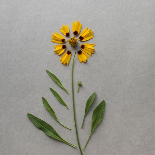 Kit Flower II Plant Leaf Blossom Esthetic Broken Funny Yellow Gray Green Super Still Life Handicraft construction kit Connect Repaired Creation knolling