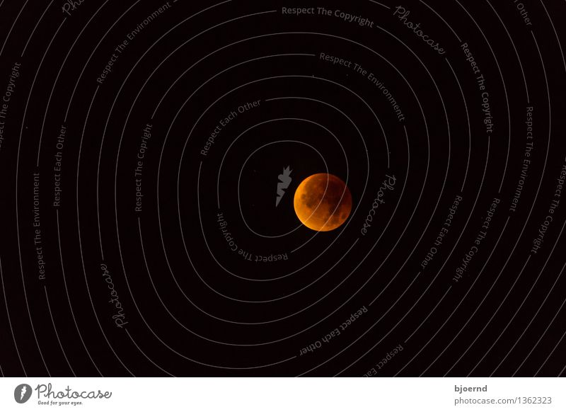 Sky Nature Red Black Autumn Death Religion and faith Brown Fear Dangerous Hope Longing Cloudless sky End Concern Moon