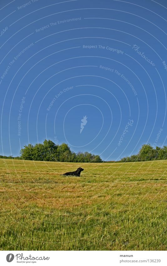 Nature Sky Green Summer Calm Animal Yellow Far-off places Relaxation Meadow Grass Spring Freedom Dog Warmth Landscape