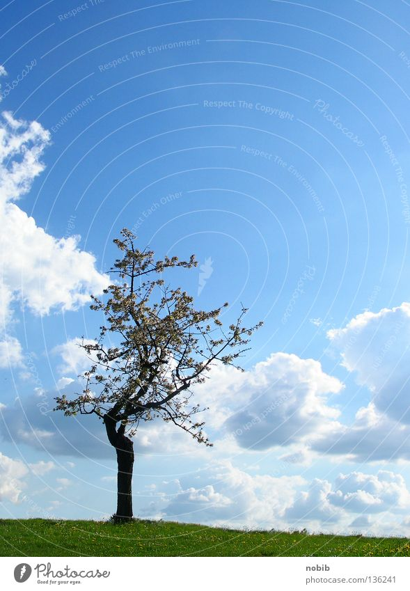 solitary Loneliness Tree Green Clouds Meadow Spring Calm Mono Sky Blue Sun