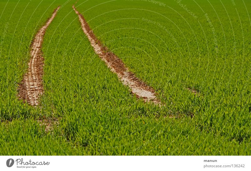 Nature Green Plant Spring Landscape Lanes & trails Line Field Earth Fresh Growth Authentic Tracks Grain Agriculture Blade of grass