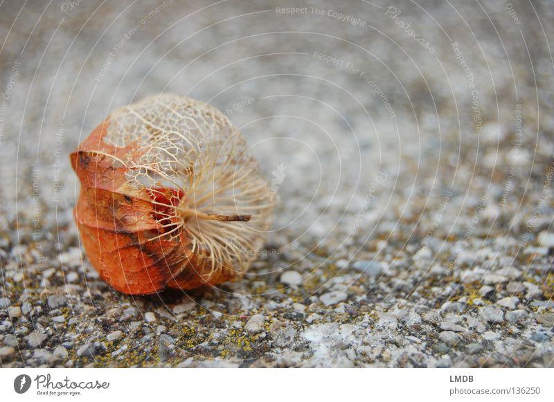 Old Plant Flower Calm Life Relaxation Death Autumn Sand Stone Sadness Orange Heart Skin Fruit Broken