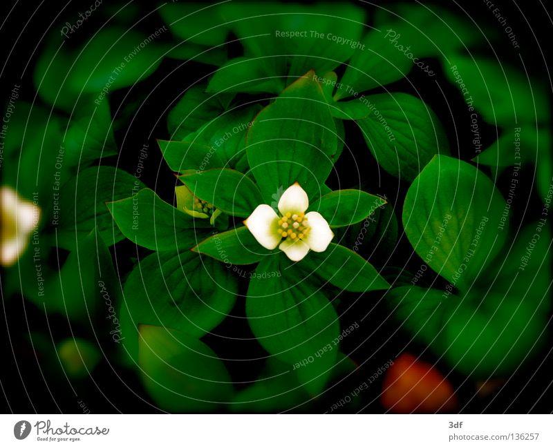 spring awakening Flower Spring Blossom White Wake up Sprout green leaves