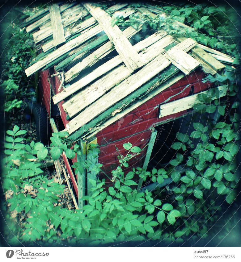 Derelict Concentrate Analog Hut Edge House (Residential Structure) Reflection Grid Frame Viewfinder Hazy Focal point Gardenhouse Bordered Lightshaft