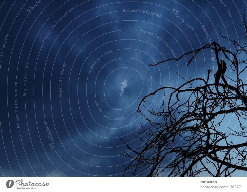 Sky Clouds Dark Bird Dangerous Threat Branch Evil Ominous