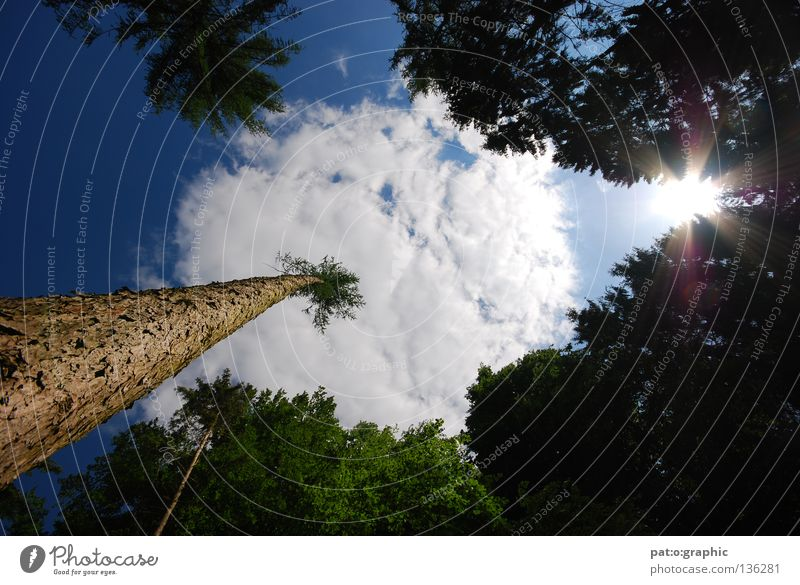 Nature Sky Tree Sun Summer Clouds Forest Stone Bushes Fir tree Dandelion Palm tree Stick Lens flare Spruce