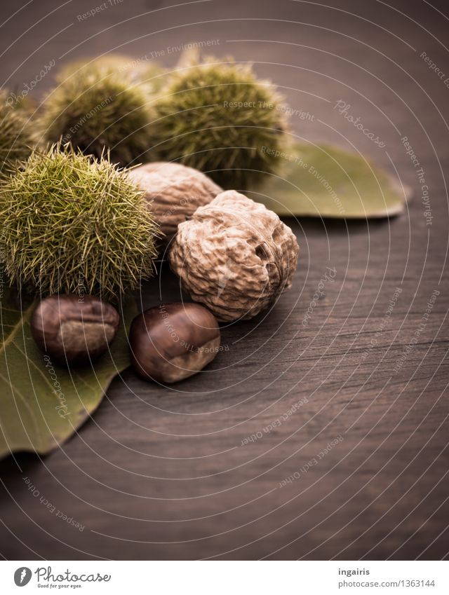 Autumn fruit 2 Plant Leaf Walnut Nut Edible nut Fruit Sweet chestnut Wood Healthy Delicious Natural Round Thorny Brown Green Tree fruit Chestnut Thanksgiving