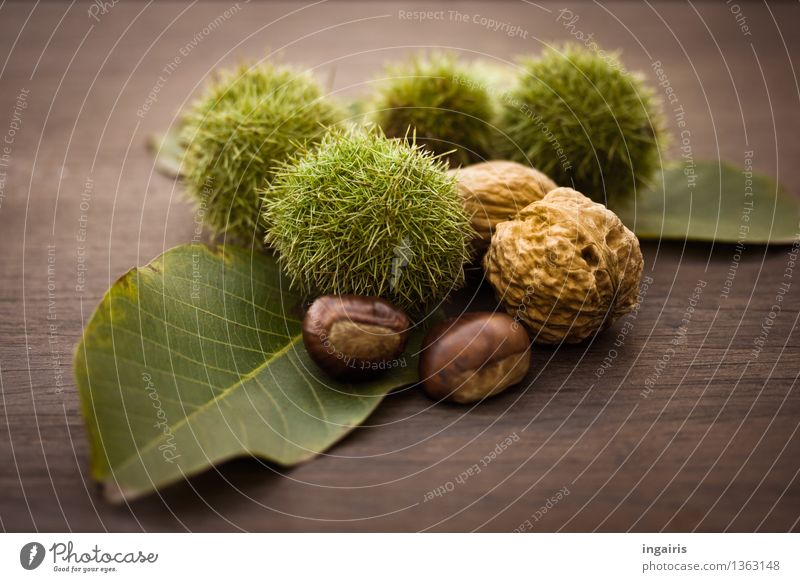 autumn fruit Fruit Nutrition Autumn Plant Leaf Sweet chestnut Walnut Edible nut Wood Delicious Natural Round Thorny Dry Brown Green Tree fruit Subdued colour
