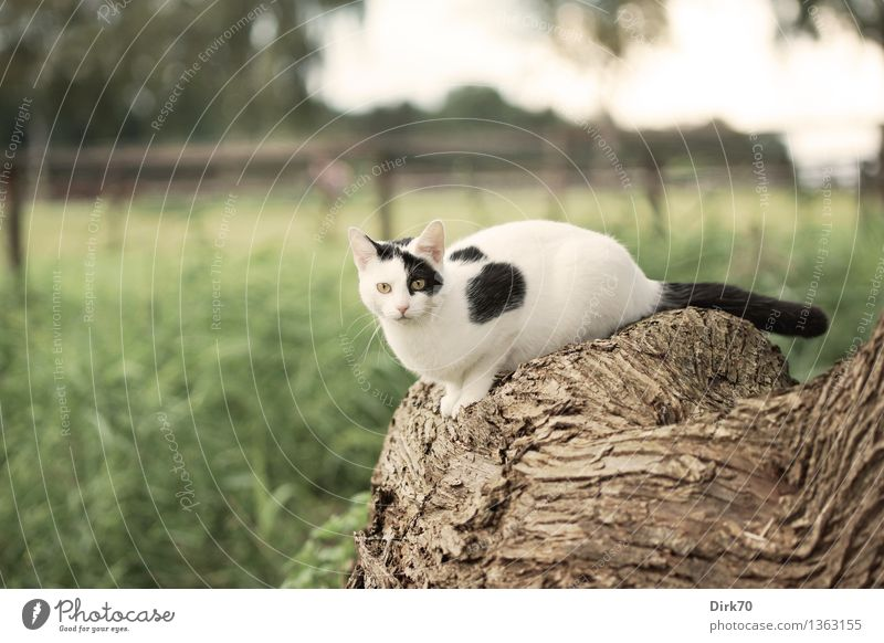 Cat Nature Green White Tree Animal Black Autumn Meadow Grass Brown Lie Field Free Sit Observe