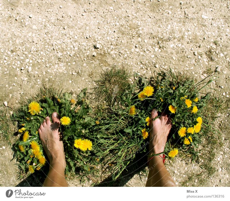 Eco slippers Colour photo Exterior shot Island Legs Feet Earth Drought Flower Grass Footwear Stone Dirty Dry Brown Yellow Gray Green Earthy Gravel Pebble Dust