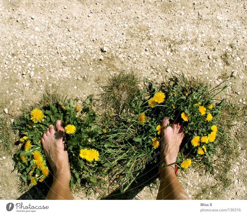 Green Flower Adults Yellow Grass Gray Stone Legs Feet Brown Earth Footwear Dirty Island Dry Dandelion