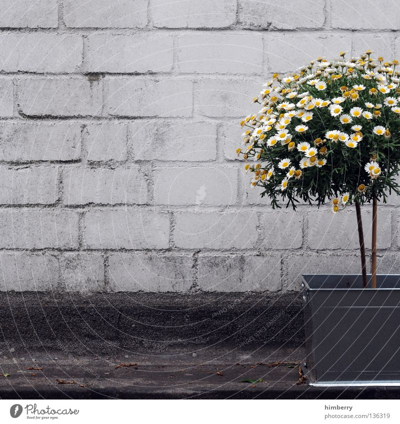 Tree Flower Colour Street Stone Style Wall (barrier) Concrete Decoration Industry Industrial Photography Painting (action, work) Manmade structures Bouquet