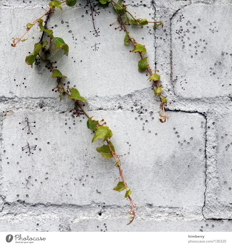 Tree Flower Colour Street Stone Style Dye Wall (barrier) Concrete Decoration Industrial Photography Painting (action, work) Manmade structures Bouquet Seam